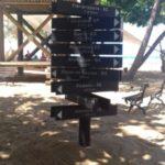 Projeto Tamar na Praia do Forte